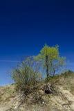 zielone rośliny Zdjęcie Royalty Free