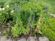 Zielone rośliny i kwiaty purpurowi i biali Obraz Stock