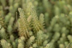 zielone ro?liny Selekcyjna ostro?? kaktus zdjęcia royalty free