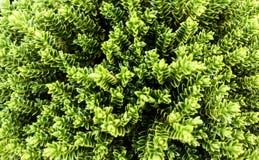 Zielone rośliny, tapety, allo w zieleni Fotografia Royalty Free