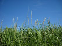 zielone słomy Zdjęcia Stock