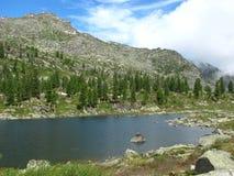 Zielone sosny na skalistym wzgórzu blisko jeziora fotografia royalty free