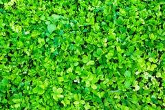 zielone tło rośliny Obraz Royalty Free