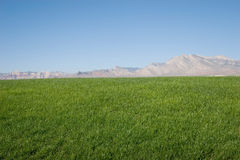 zielone trawiastych wzgórz Zdjęcia Royalty Free