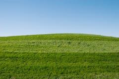 zielone trawiastych wzgórz Obraz Stock