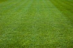 zielone trawy konsystencja Obrazy Royalty Free