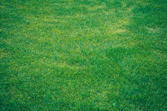 zielone trawy konsystencja Zdjęcia Royalty Free
