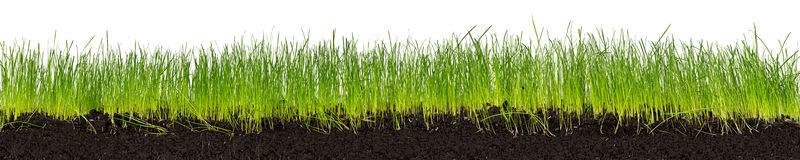 zielone trawy na ziemię Zdjęcia Stock