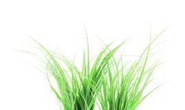 zielone trawy white Obrazy Royalty Free