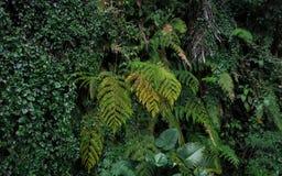 Zielone tropikalne ścienne tekstur paproci palmy i dratw rośliny zdjęcia royalty free