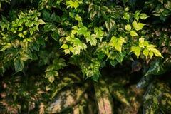 Zielone tropikalne rośliny zdjęcie royalty free