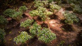 Zielone uprawy obrazy stock