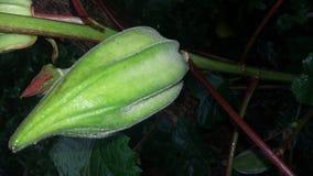 zielone warzywo zdjęcia stock