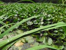zielone waterdrop trawy zdjęcie stock