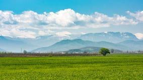 Zielone wiosen łąki obrazy royalty free