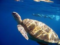 Zielonego żółwia dopłynięcie zdjęcie royalty free