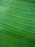 Zielonego Bananowego liścia naturalny tło Ekologiczny zdrowy wallpap Obrazy Stock