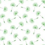 Zielonego dandelions ziarna fluff kwiecisty wzór na białym tle Obraz Stock