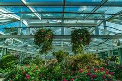 Zielonego domu dach Obraz Royalty Free