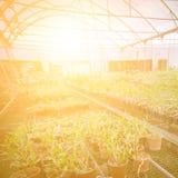Zielonego domu kwiatu storczykowa pepiniera Obraz Stock