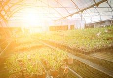 Zielonego domu kwiatu storczykowa pepiniera Zdjęcie Royalty Free