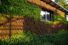 Zielonego domu ogrodnictwo Obrazy Royalty Free
