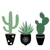 Zielonego domu rośliny w czerni puszkują haworthia i kaktusa scandi Obrazy Royalty Free