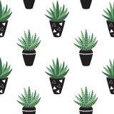 Zielonego domu rośliny w czerni puszkują sansevieria scandinavian st Zdjęcie Royalty Free