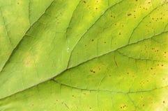Zielonego energetycznego liścia makro- strzał jak ekologii rośliny abstrakt Zdjęcia Stock