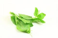 zielonego grochu krótkopęd Obrazy Royalty Free