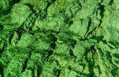Zielonego koloru Drewnianej tekstury laptopu tła wektorowa tapeta fotografia royalty free