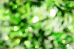 Zielonego koloru tła abstrakcjonistyczna witka zamazywał defocus bokeh światło obrazy stock