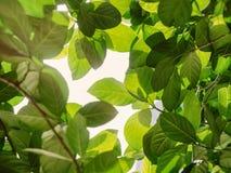 Zielonego liścia światła słonecznego parka natury plenerowy tło Obraz Royalty Free