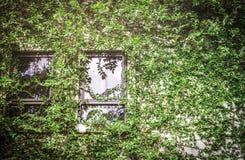 Zielonego liścia budynku nakrywkowa ściana Obraz Stock