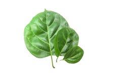 Zielonego liścia tekstury makro- tło Obrazy Stock