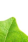 Zielonego liścia tekstury makro- tło Obraz Royalty Free
