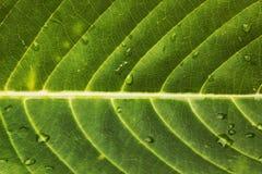 Zielonego liścia zbliżenia tła Makro- tekstura Zdjęcia Stock
