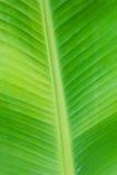 Zielonego liścia bananowa tekstura w Thailand. Fotografia Royalty Free