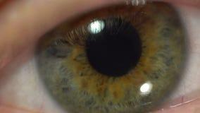 Zielonego oka ekstremum w górę irysa i ucznia dilating i skraca Bardzo znakomicie szczegółowa ludzka anatomia, mruga zdjęcie wideo
