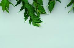 Zielonego papieru tło z wibrującymi liśćmi zdjęcie royalty free