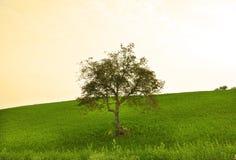 zielonego wzgórza drzewo Obrazy Royalty Free