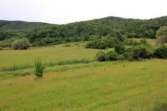 Zielonego wzgórza panoramy widok, utrzymany natury środowisko zdjęcie royalty free