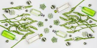 Zielonego ziołowego weganinu naturalny kosmetyczny położenie z butelkami skóry opieki produkty z oznakować przestrzeń, ziele i kw fotografia stock