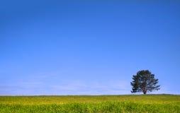zielonej łąki pojedynczy drzewo Zdjęcie Stock