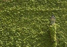 zielonej ściany Zdjęcia Royalty Free