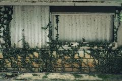 zielonej ściany Obrazy Stock