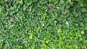 zielonej ściany Zdjęcia Stock