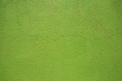zielonej ściany Zdjęcie Royalty Free