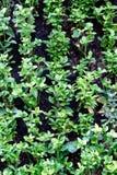 zielonej ściany Obraz Stock