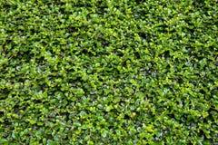 zielonej ściany Obrazy Royalty Free